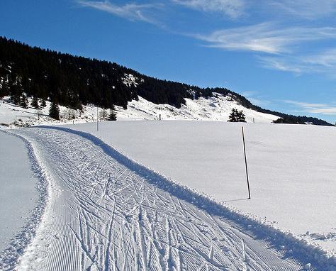 Běžky, biatlon a nordic walking